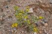 и среди камней растут цветы