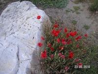 цветы и развалины