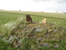 Памятник древности Аркаим