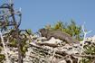 на острове игуан