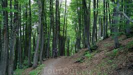 На спуске к Фиштинской поляне-очень красивый лес