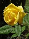 Турецкая сказка о прекрасной розе