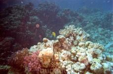 На дайвинге. Кораллы