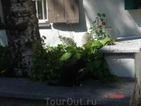киса сидит перед дверью) похож на моего котишку