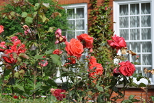 Чудные розы у дома Зигмунда Фрейда.