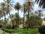 Пальмовый парк