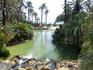 Разведение финиковых пальм в Эльче известно, по крайней мере, со времён иберов, то есть примерно с V века дон.э. то есть пальмы на этих землях растут ...
