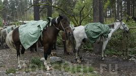 не состоявшаяся конная прогулка