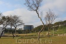 Вид на главный корпус (пресс-центр Саммита АТЭС) с Университетской набережной