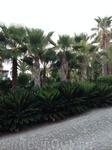 Отель пять звёзд ...и как же без пальм?