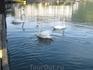 Ziller See