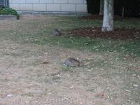 кролики повсюду