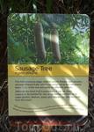 Описание колбасного дерева