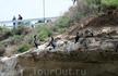 Гнездовья бакланов,  кстати, на этих скалах мирно уживаются разные птицы и морские котики.