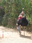 Здесь можно прокатиться на страусе