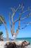 Самые фотографируемые деревья у нас на пляже