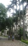 Сан-Паулу. Пальмовая аллея у городского театра