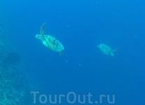 Черпахи над стенкой рифа.