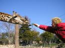 в лиссабонском зоопарке можно кормить животных