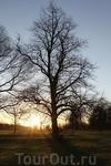 Лондон. утро в Гайд парке
