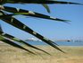 набережная сквозь призму листьев пальмы
