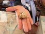 жемчужина, обнаруженная в раковине