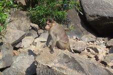 На водопаде Дудхсагар, местные жители
