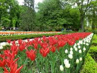 Под его руководством сад не только занимался научными работами, но, например, весной и летом раздавал всем желающим лекарственные растения.