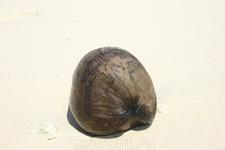 """На острове Рая, """"волшебный орех"""" на пляже"""