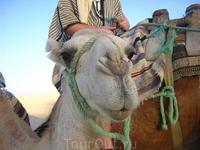 катание на верблюдах по Сахаре