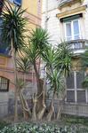 Опять пальмовый палисадник