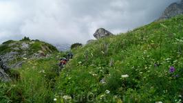 Тропа на Армянский перевал Растительность по пути в рост человека