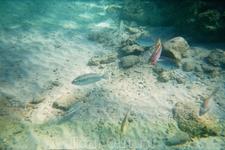 Мир красного моря.Рыбы сняты рядом с пляжем.Нужна маска.