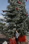 елка в Ницце