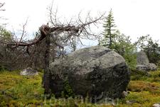 Камни и деревья причудливой формы придают мистический облик горе...