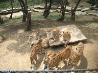 Китай, Далянь. зоопарк. Также в ожидании сырого куска с неба)