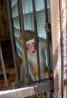 Сухумский питомник обезьян