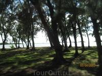 Лес реликтовых сосен на северном побережье.