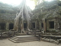дерево проросло на разрушенном храме