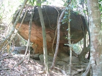 джунгли, такие вот каменные грибочки там растут...