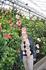 Сады Дю-Пона