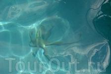 О чудо, я увидела живого осьминога в море.