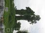 Батумская природа