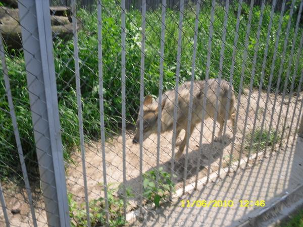 Волк накручивал км, зарабатывая на пайку))))