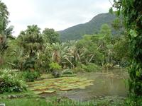 «Озеро Фрея Леандро», названное в честь первого директора Ботанического сада, представляет своим посетителям чудесное зрелище, так как на его поверхности ...