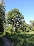 Вот такие тропинки можно обнаружить в парке