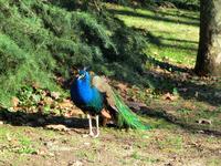В парке есть голубятня, в которой до сих пор разводят почтовых голубей. Есть голубятня, в которой разводят декоративных голубей. А еще есть птичник, в ...