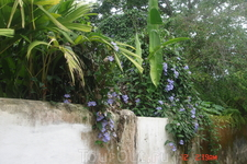 Парати-как и вся Бразилия очень много зелени и цветов.