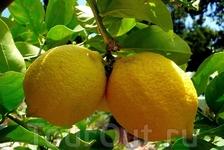 """""""Сицилия - сладкий мед, горькие лимоны""""..."""