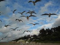 Кормим чаек на берегу моря в Булдури